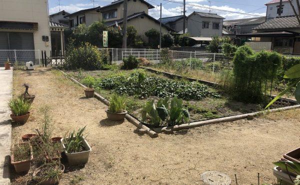 庭にある野菜でバーベキューなども開催されます。