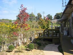 遊歩道があり、季節の花や庭の池を見ながら、お散歩ができます。