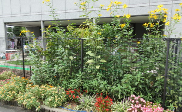 花壇にて野菜や花を植えれます